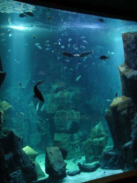 aquario da